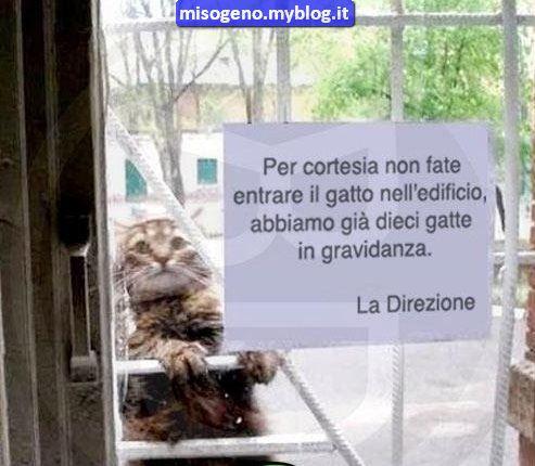Non fate entrare il gatto